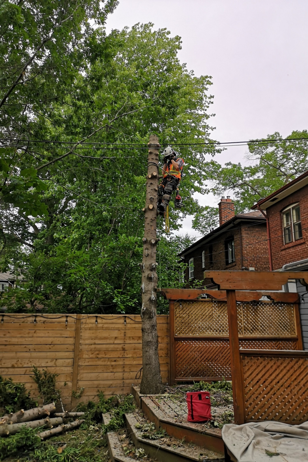 Backyard Makeover with Ironwood Arboricultural