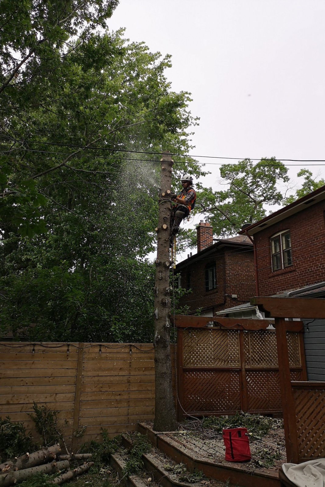Backyard Tree Removal Services at Ironwood Arboricultural