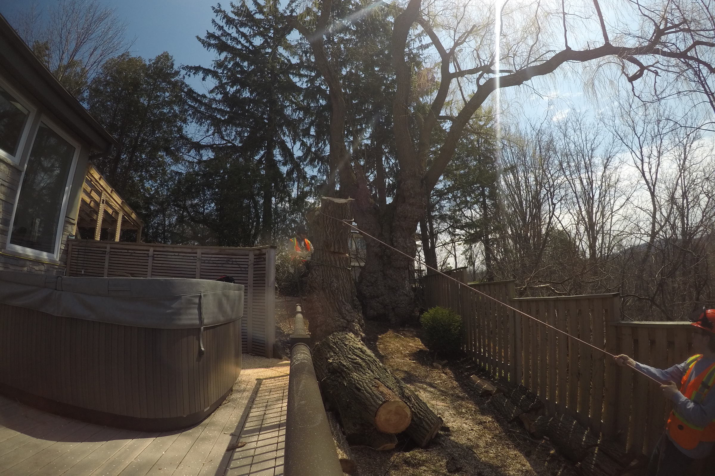 Cutting Down a Tree with Ironwood Arboricultural