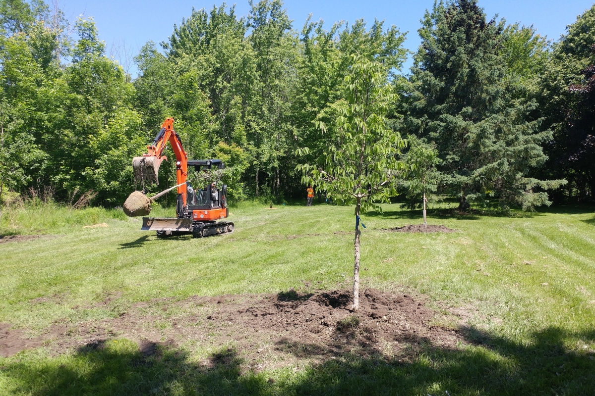 Equipment on Site with Ironwood Arboricultural
