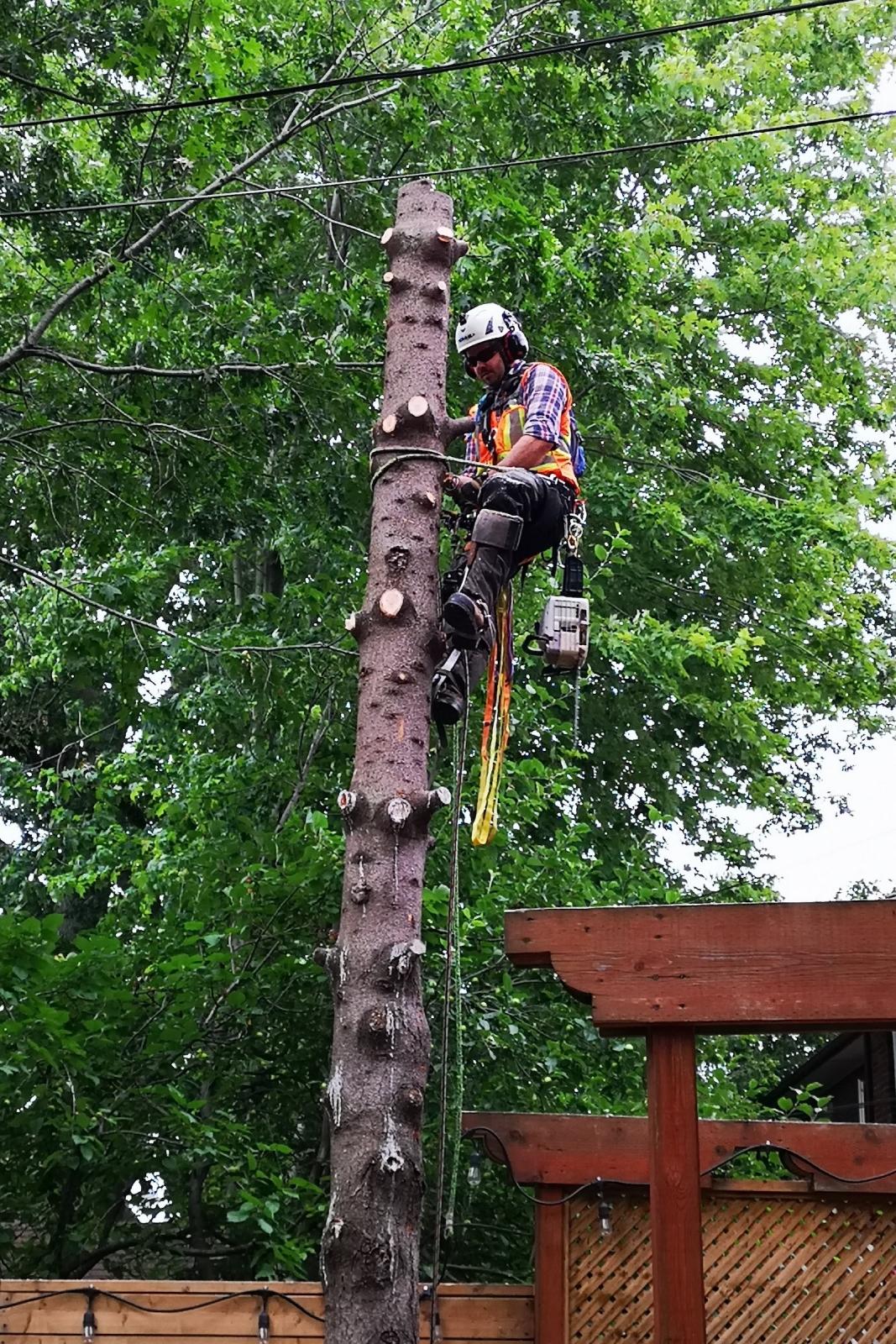 Expert Tree Climbing at Ironwood Arboricultural
