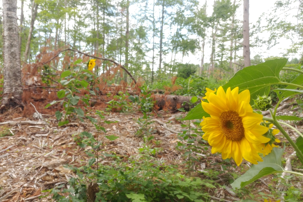 Flower in the Woods with Ironwood Arboricultural