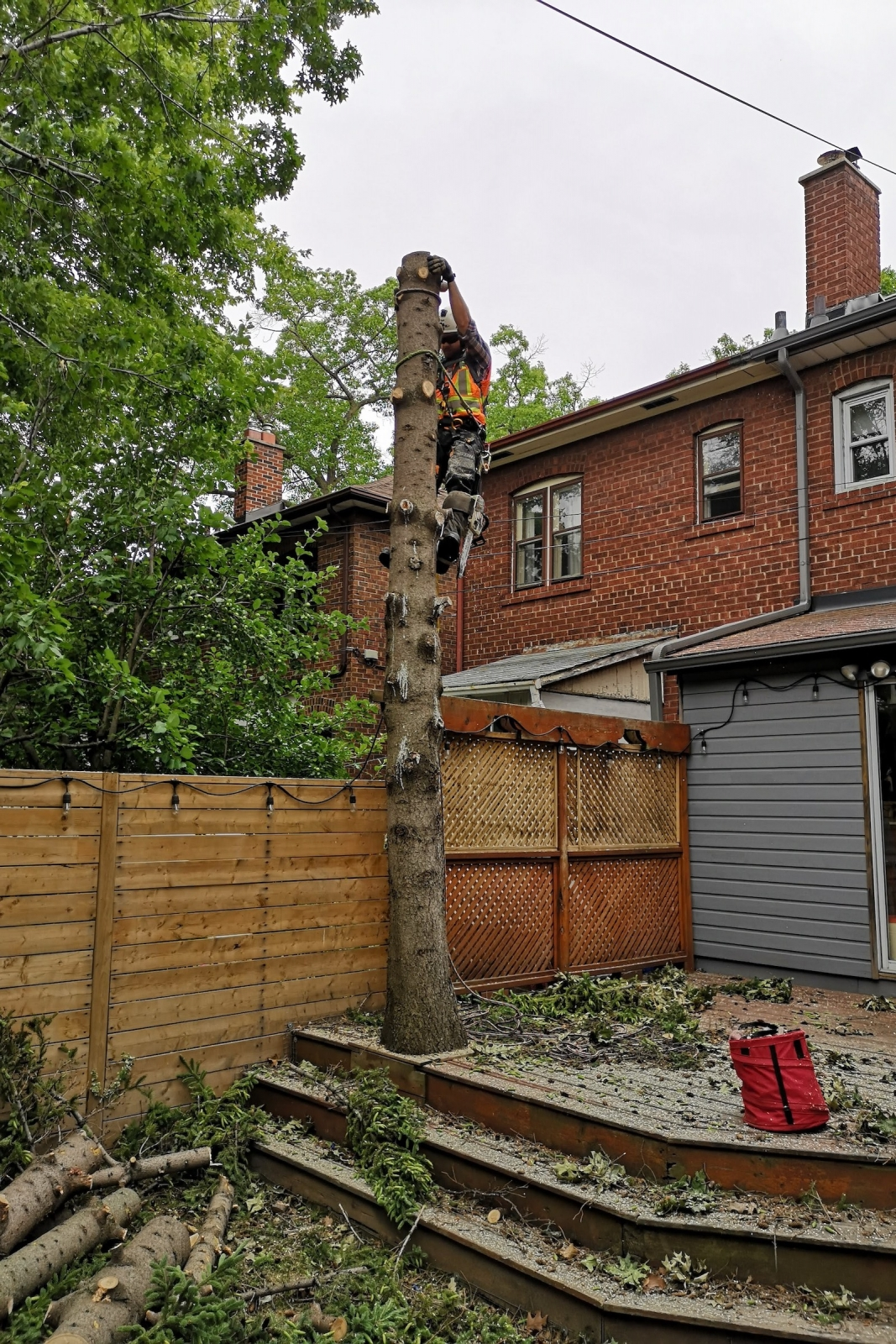 Home Tree Removal Service with Ironwood Arboricultural
