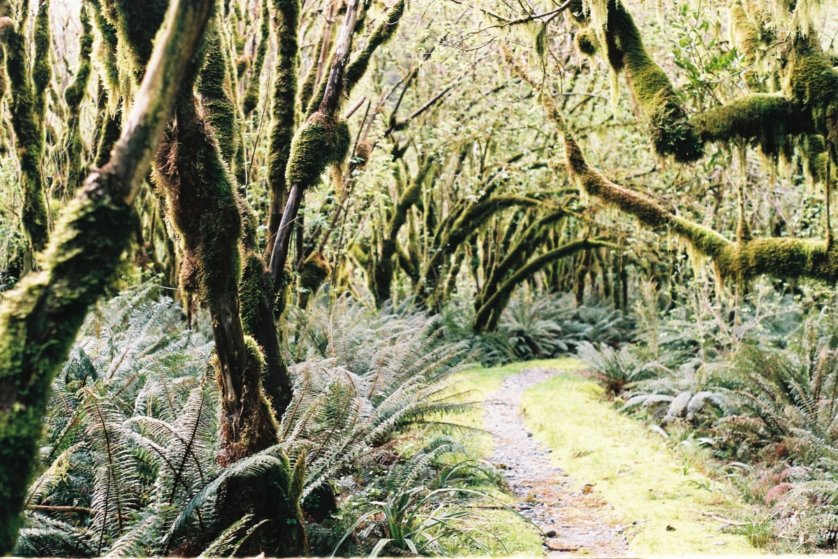 Mossy Trees with Ironwood Arboricultural