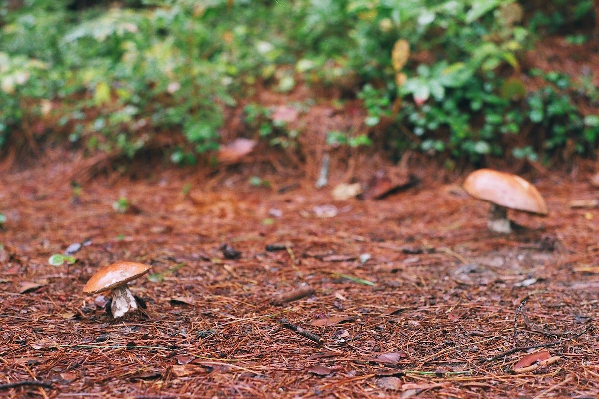 Mushroom2 with Ironwood Arboricultural