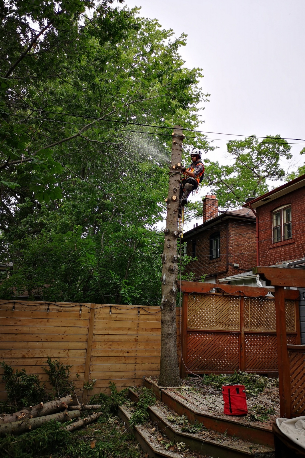 Safe Tree Cutting Services at Ironwood Arboricultural