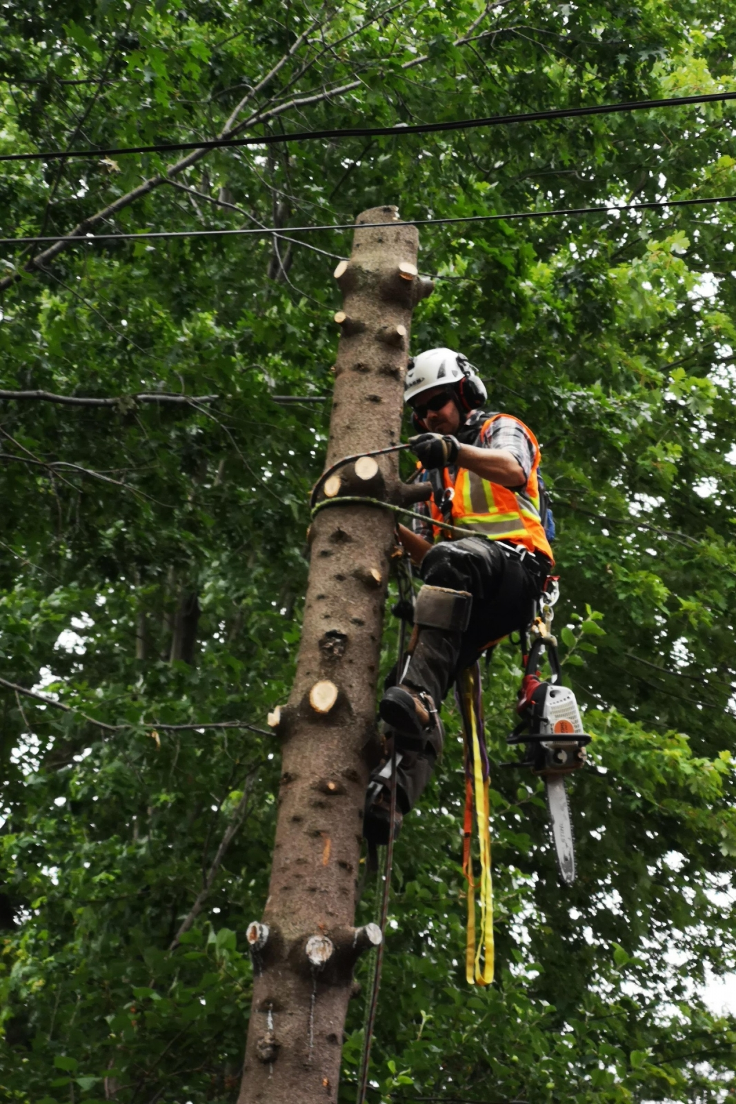 Safety Practices with Ironwood Arboricultural