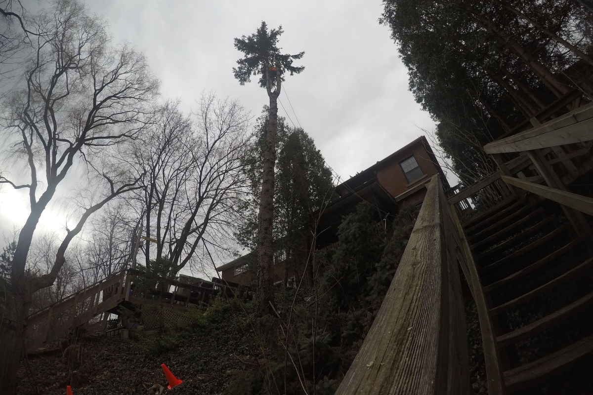 Tree Trimming with Ironwood Arboricultural