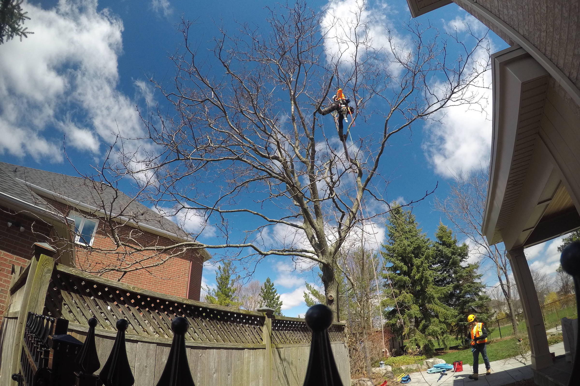 Working Site with Ironwood Arboricultural
