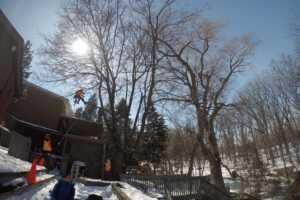 Ironwood Quarterly Arboriculture Introduction Blog Image